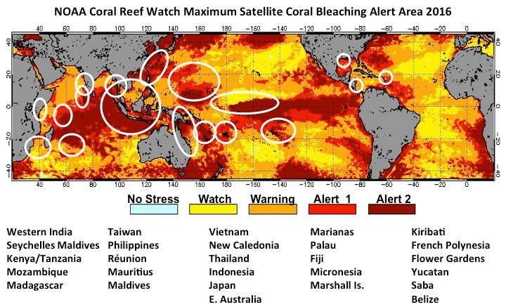 NOAA Coral Reef Watch Maximum Bleaching Alert Area Map For January December 2016 Severe Was Reported In All Areas Circled White On
