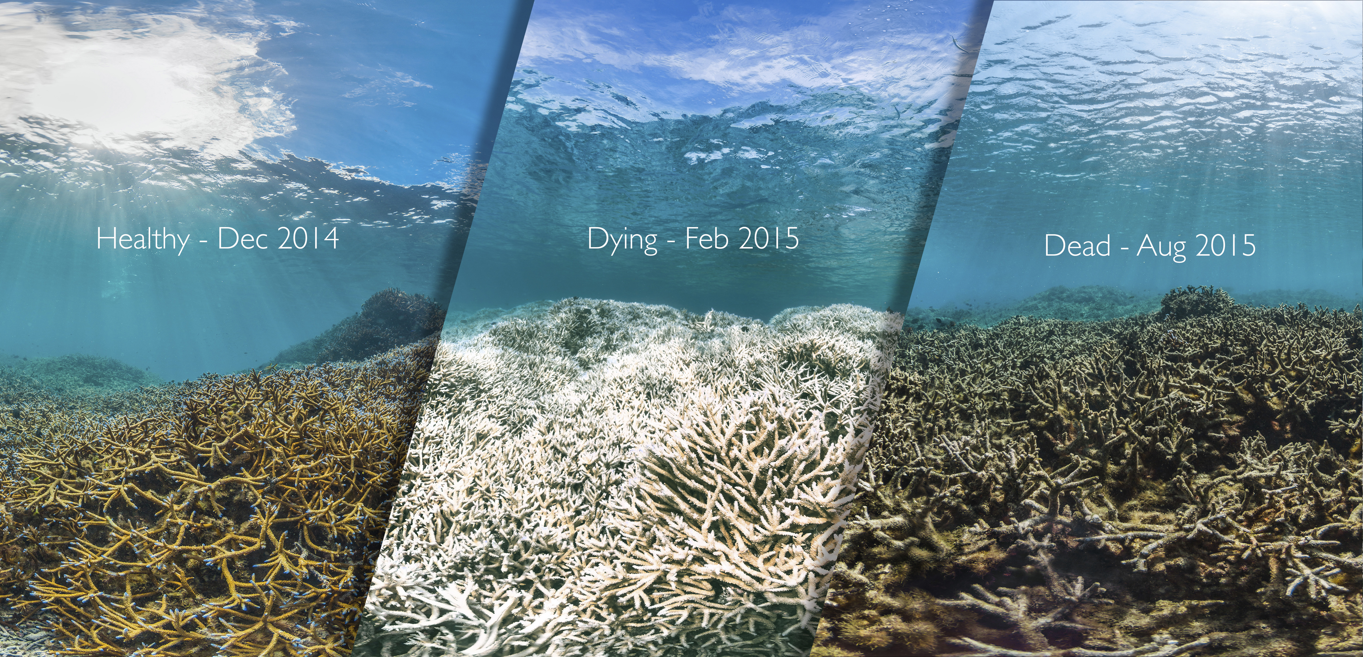 Global Coral Bleaching 2014-2017: Status and an Appeal for ...